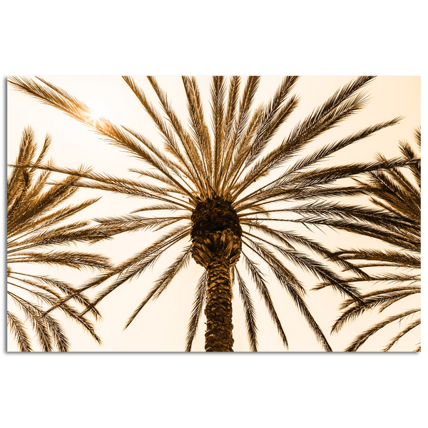 Looking up at palm tree and leaves