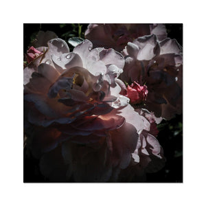 Roses After the Summer Rain Fine Art Print