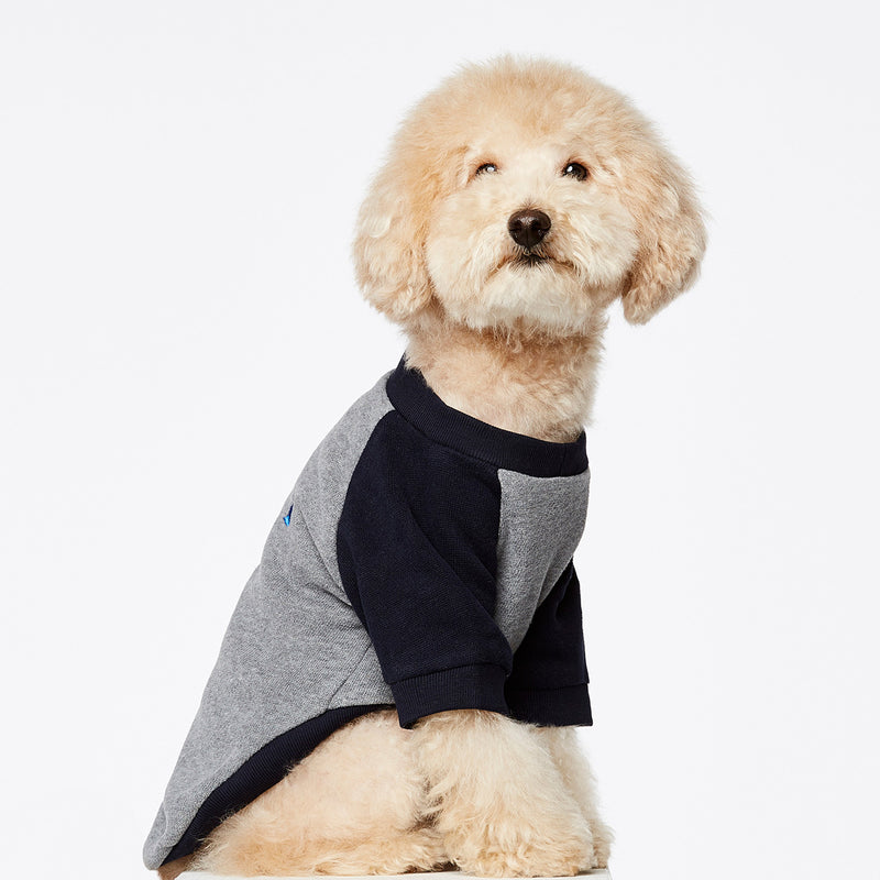 Sweat pour chien Blinky