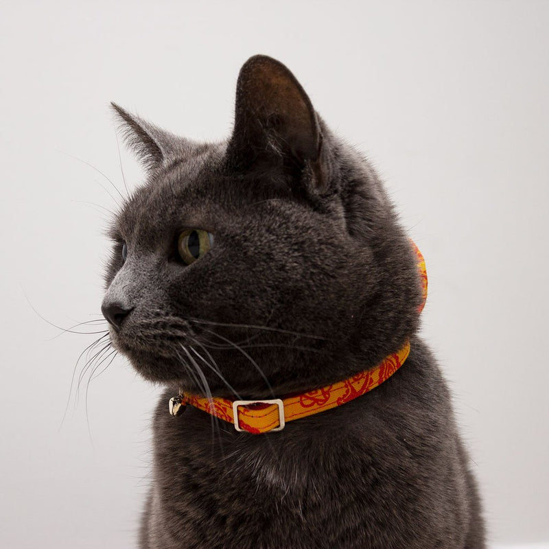 Collier pour chat Paisley