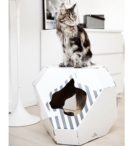 maison pour chat en carton design mia par my kotty hariet rosie. Black Bedroom Furniture Sets. Home Design Ideas