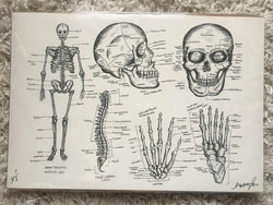Skeleton Medical Drawing Print