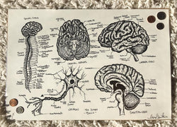 Brain Anatomical Print