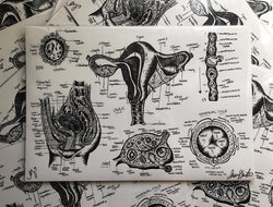 Uterus Scientific Drawing Print