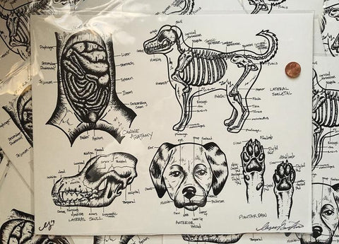 Dog Anatomy Print
