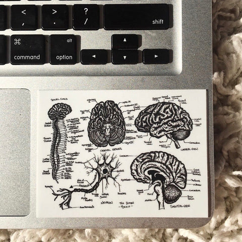 BRAIN - Anatomical Drawing Sticker