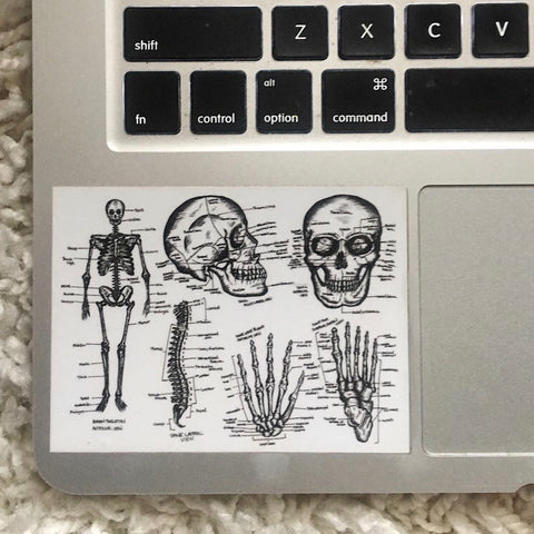 SKELETON - Anatomical Drawing Sticker