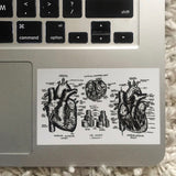 HEART - Anatomical Drawing Sticker