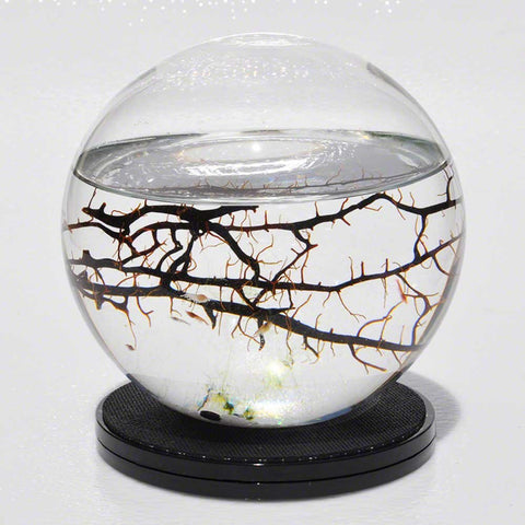 Self Sustaining Ecosphere