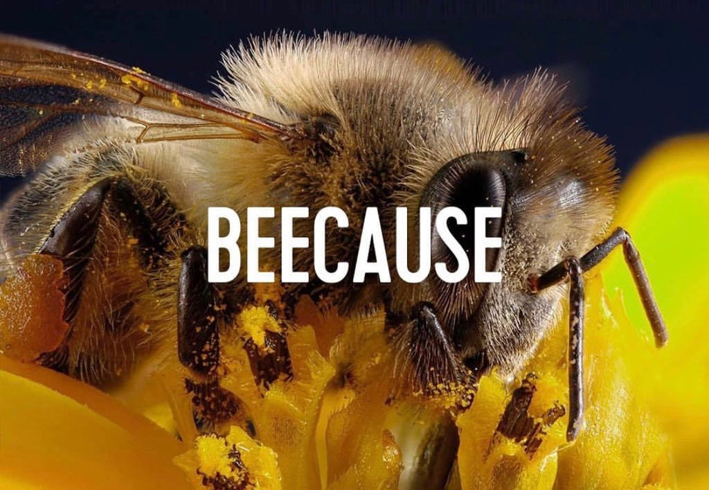 Why Are Bees Dying?