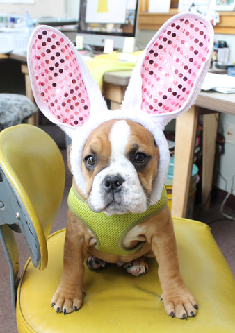 First signs of Spring, Easter Bunnies  and Cute New Puppies
