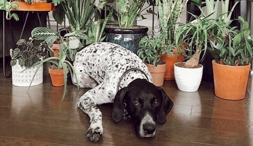 Pet safe plants
