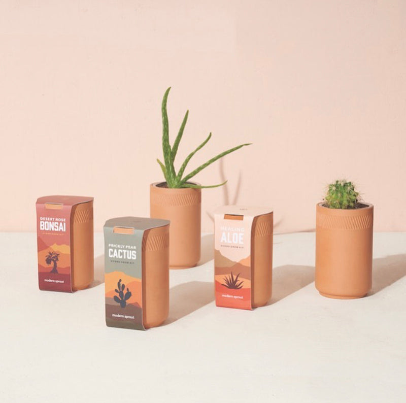 Modern Sprout Terracotta Hydro-Grow Kit
