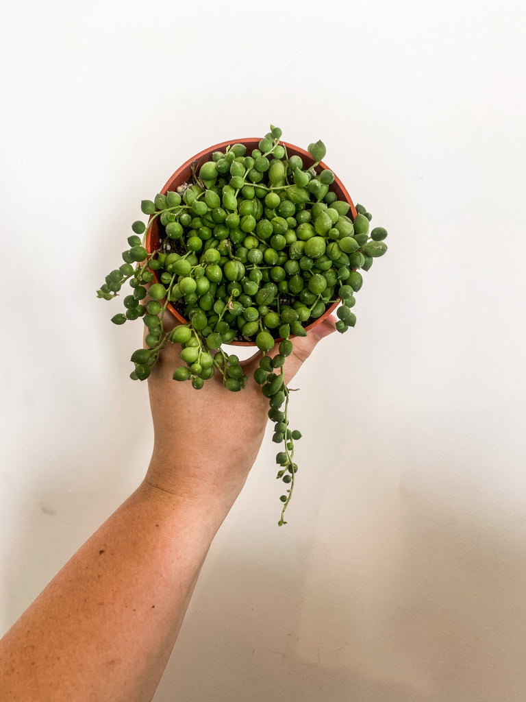 "4"" String of Pearls"