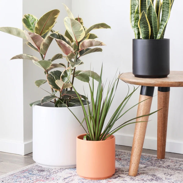 Peach & Pebble Modern Ceramic Planter Collection