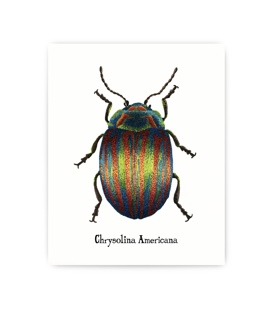 art print featuring scientific illustration of Rosemary Leaf bug