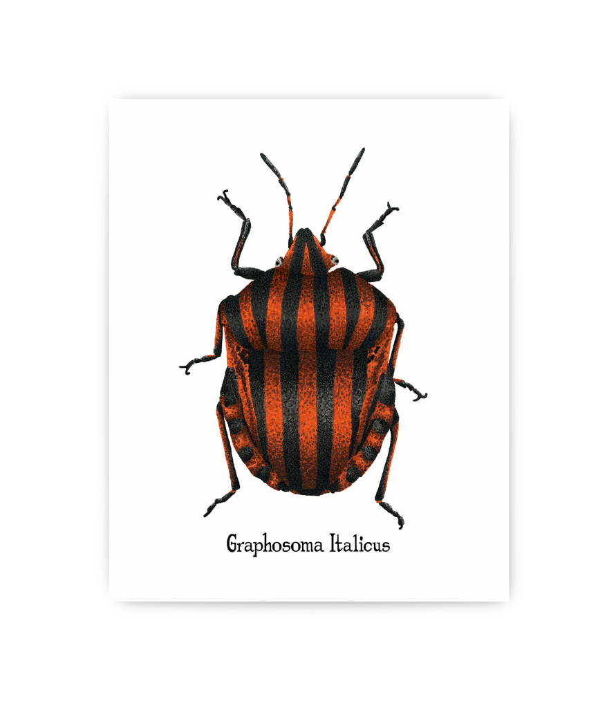 "5x7"" print featuring scientific illustration of Italian Stink Bug"