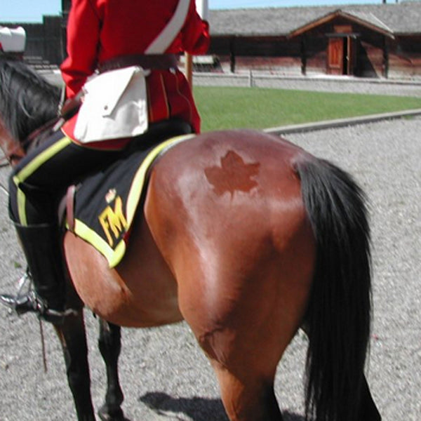 Horse with stencil art RCMP