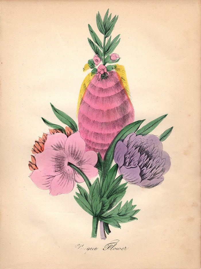 Pasque Flower (1850)