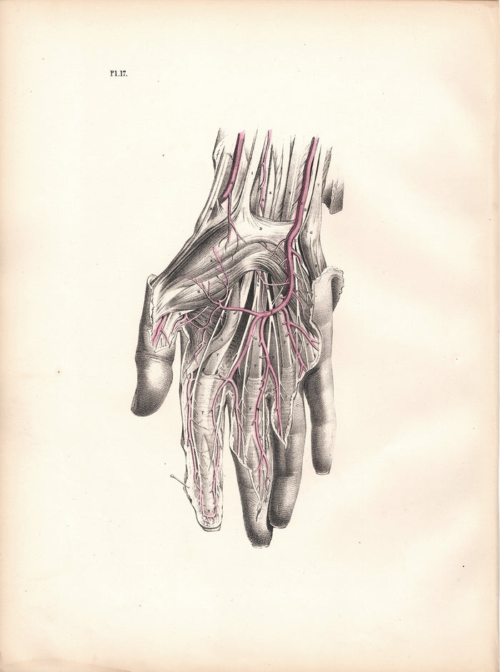 Pl. 17 The Hand (1870)