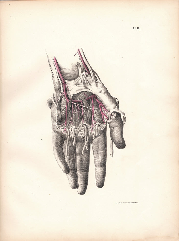 Pl. 18 The Hand (1870)