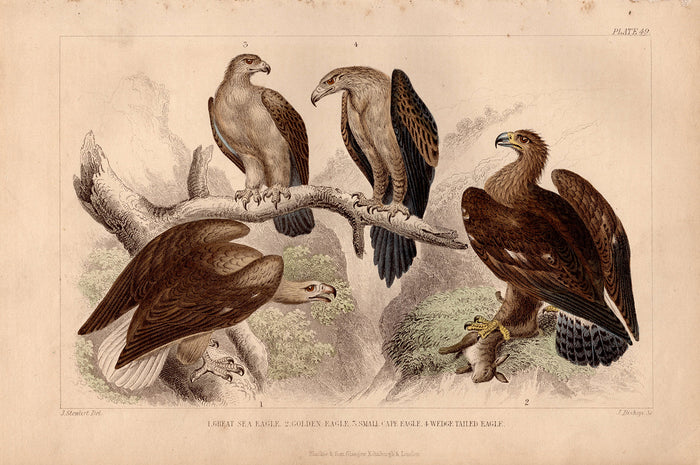 Plate 49 Eagles (1870)