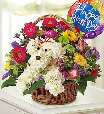 a-dog-able-in-a-basket_gofruitw/ Happy Birthday Balloon
