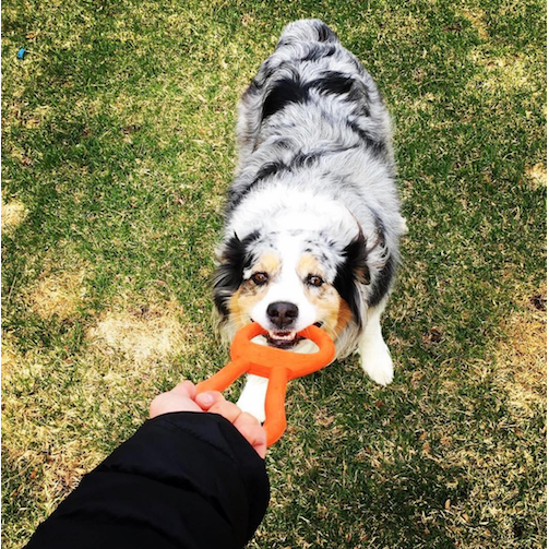 Pull your dog around with this fun and exciting chew / tug toy!