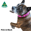 Pink and Black embroidered custom ID Collar Australian Made