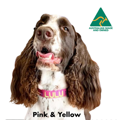 English Springer Spaniel wearing an OriginalsAustralian Made ID Collar with name and number, Pink with Yellow Embroidery