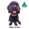 Yellow and Red embroidered custom ID Collar Australian Made