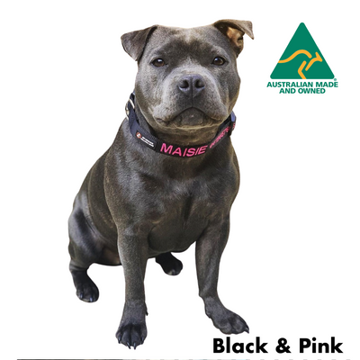 Staffy wearing a Black and Pink embroidered custom ID Collar Australian Made