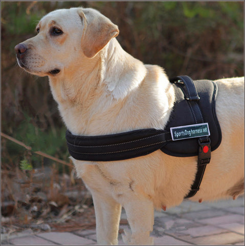 Dog harness S-XL Padded robust