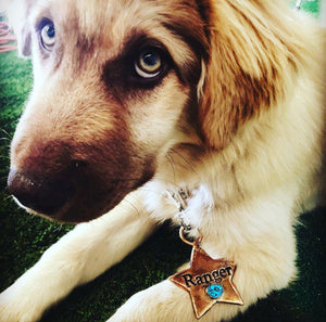 Turquoise Star Dog Tag