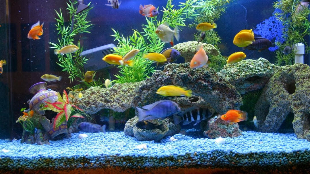 Supporting your Local Fish Store (LFS)