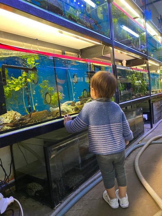 Booming Aquariums... Finally!