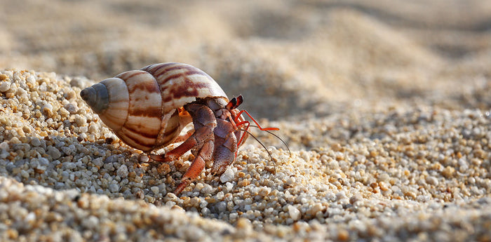 Hermit Crab care sheet