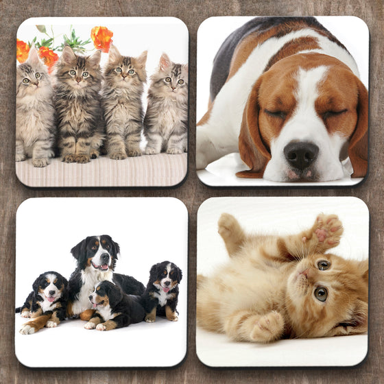 Cats vs Dogs  x 4 Coasters C0025
