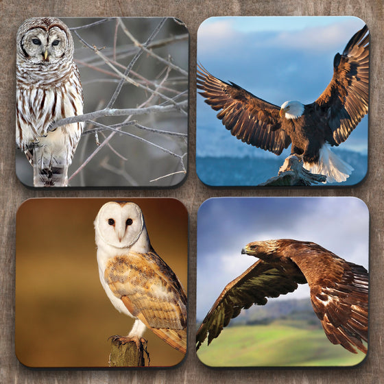 Owls and Eagles x 4 Coasters C0030