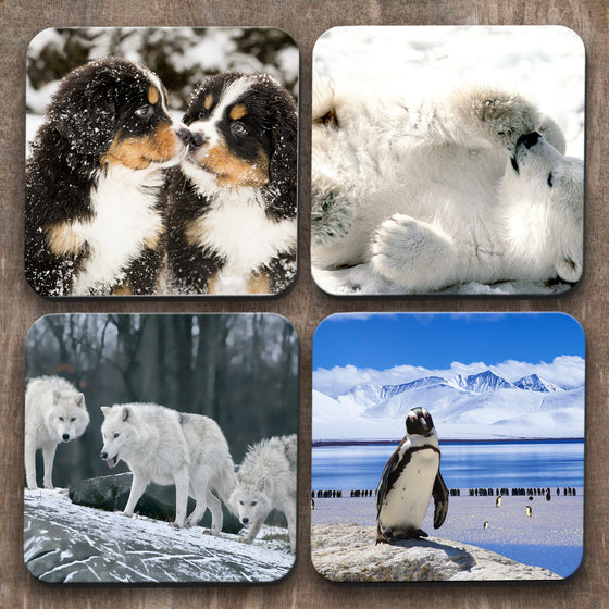 Animals in the Snow x 4 Coasters C0044