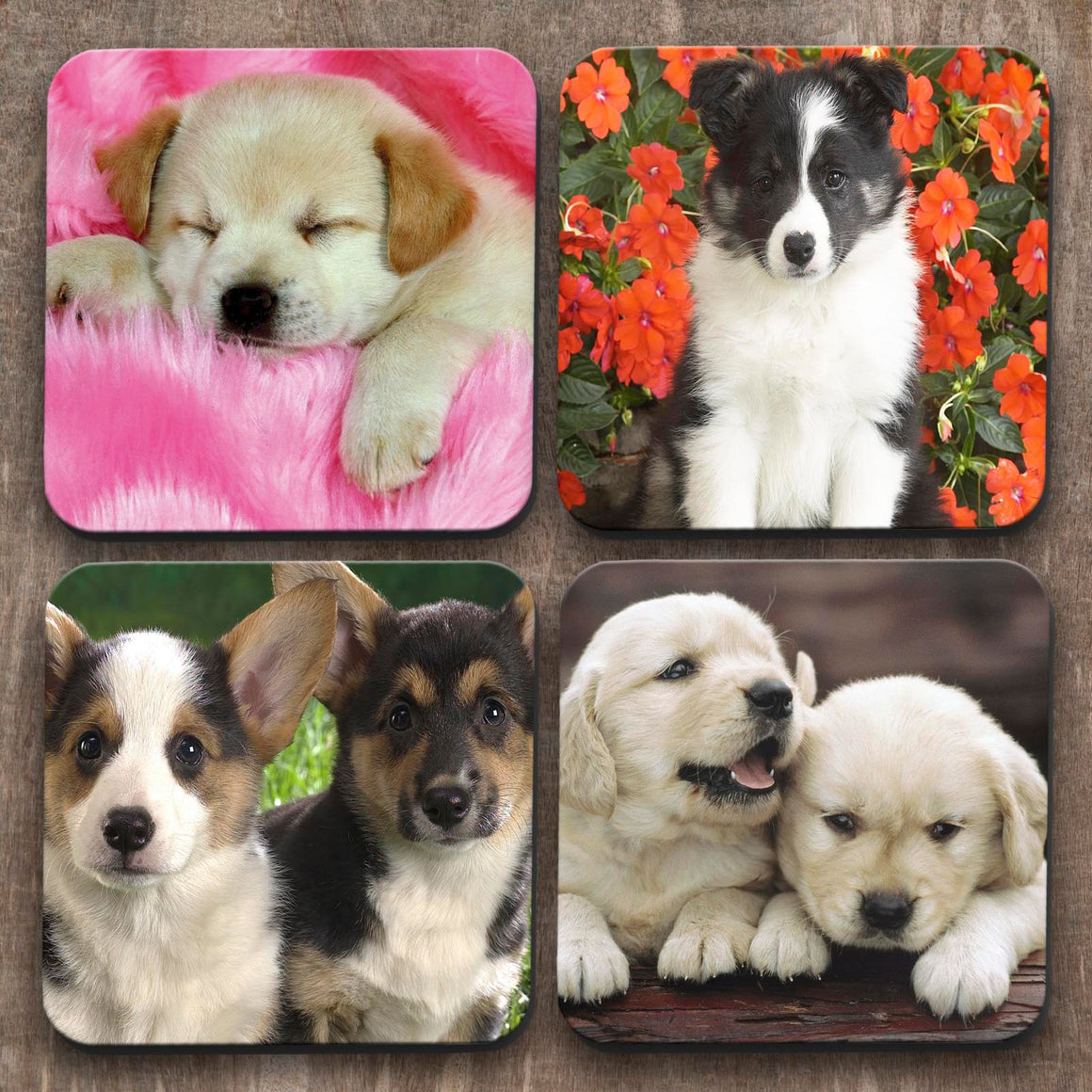 Puppies x 4 Coasters C0018