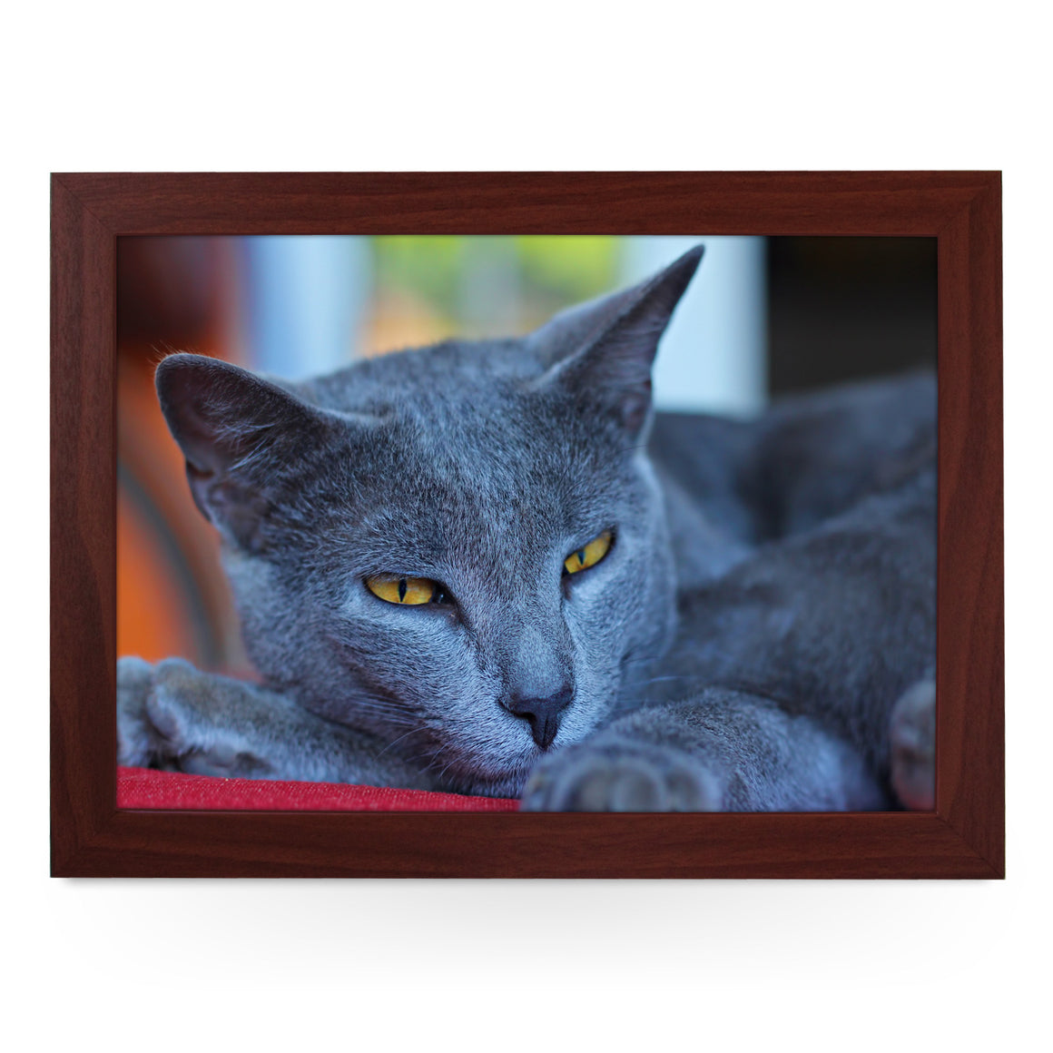 Chartreux Cat Lap Tray - L0020