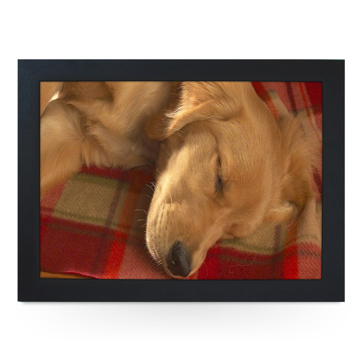 Sleeping Golden Retriever Lap Tray - L0041