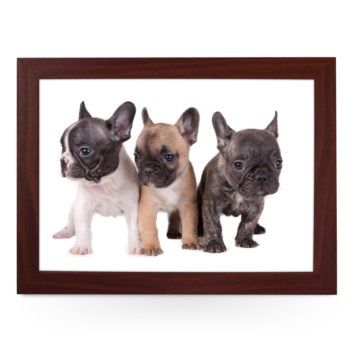 Three French Bull Dog Puppies Lap Tray - L0079