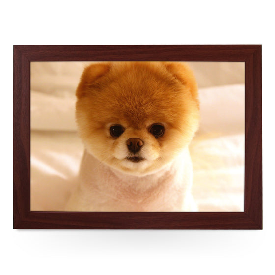 Short Haired Pomeranian Dog Lap Tray - L0116
