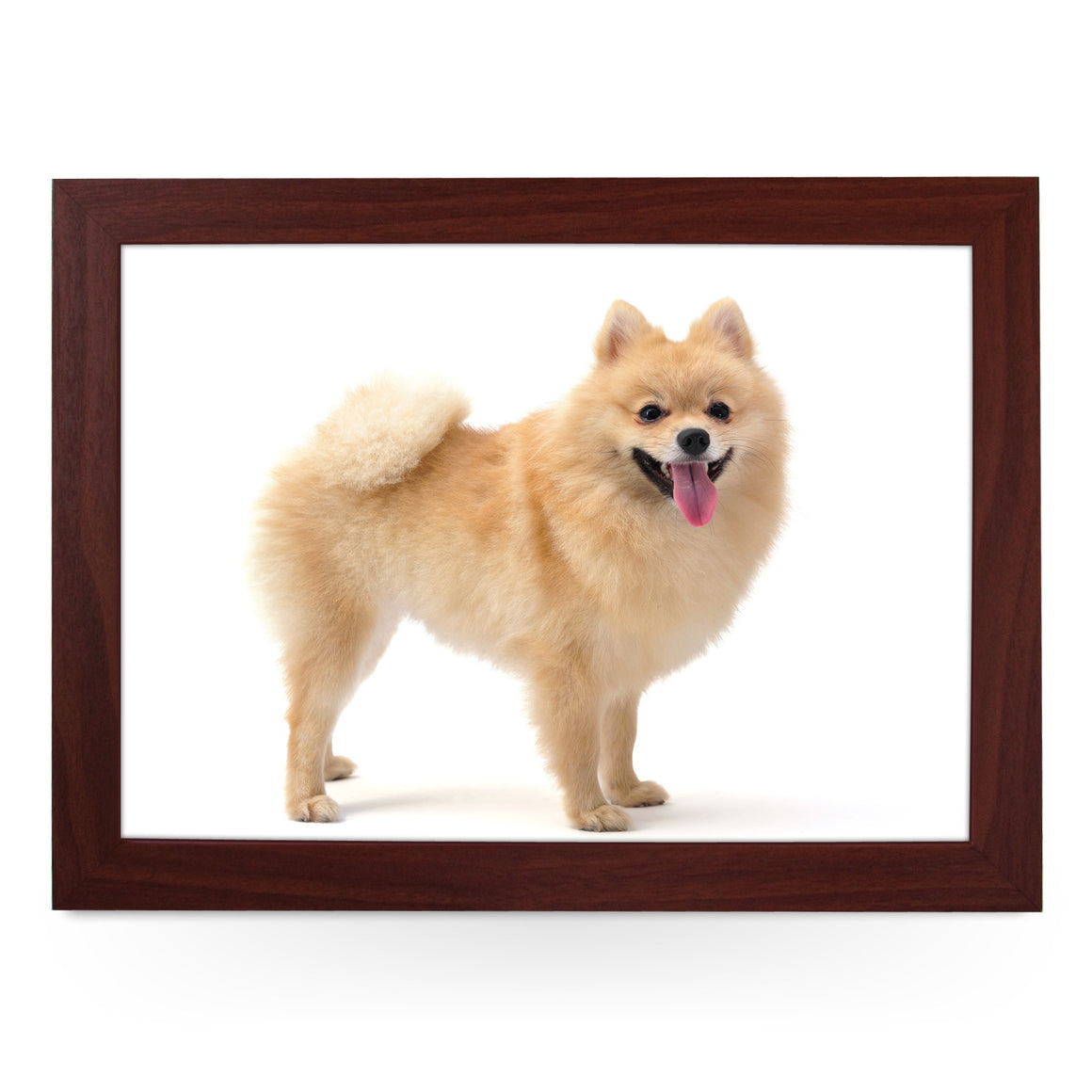 Pomeranian Dog Lap Tray - L0124