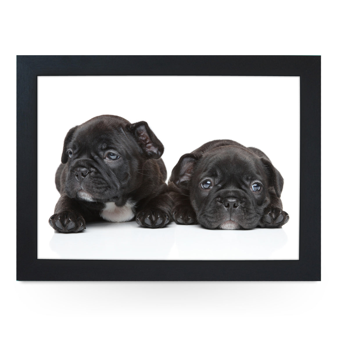 French Bulldog Puppies Lap Tray - L0139
