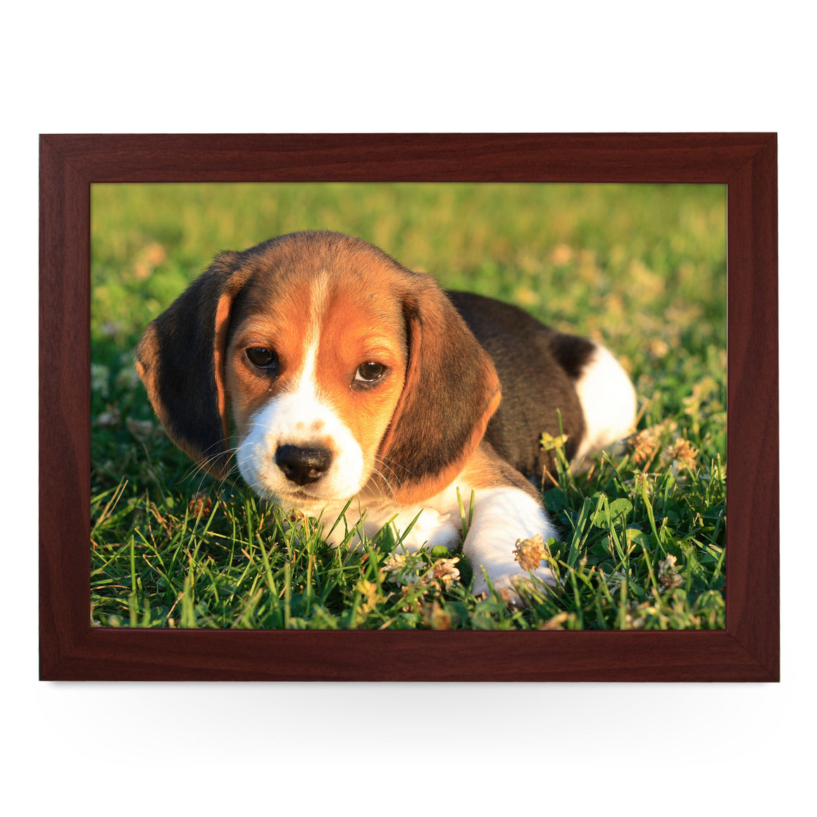 Beagle Puppy Lap Tray - L0159
