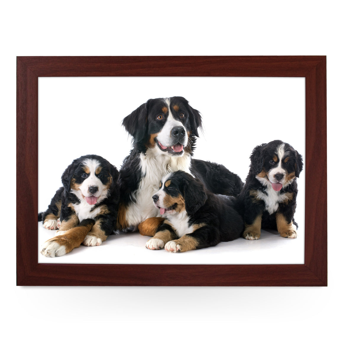 Family of Bernese Moutain Dogs Lap Tray - L0161