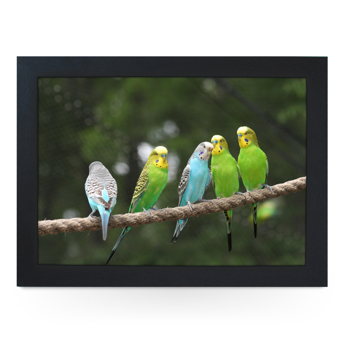 Budgies on a Rope Lap Tray - L0175